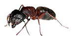 ant exterminator services in michigan