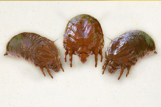 Home Commercial Pest Control Troy Mi Helping Residents Identify