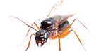 carpenter ants exterminator services in michigan