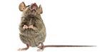 mice removal and bug exterminator services in michigan