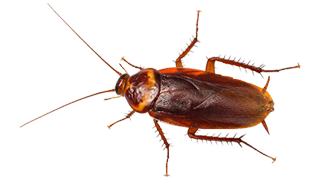 pest-control-for-cockroaches-in-michigan