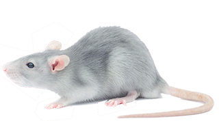 rat exterminator services in michigan