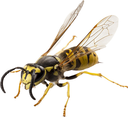 Pest Control Services Livonia MI