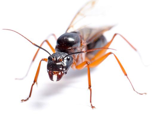Pest Control Exterminator in Troy Michigan