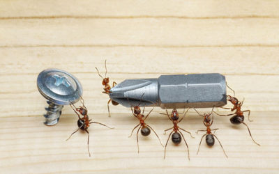 Carpenter Ants, Another Type of Pest!
