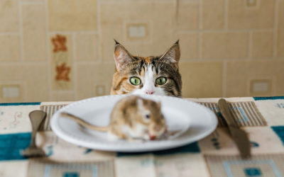 Mice, Unwanted House Guests