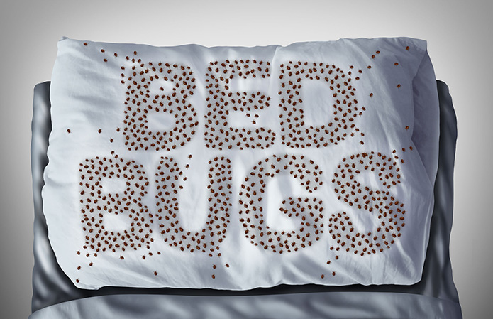 Pests that Resemble Bed Bugs