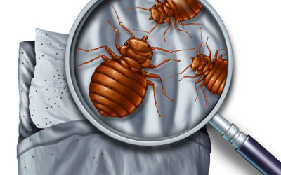 Michigan Pest Control and The World of Bed Bugs