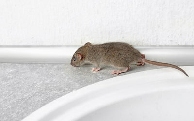 Are There Mice in Your Space? | Michigan Pest Control