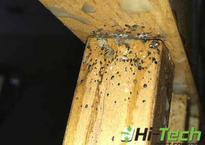 bedbugs-on-a-bed-bunk-michigan-pest-control-services