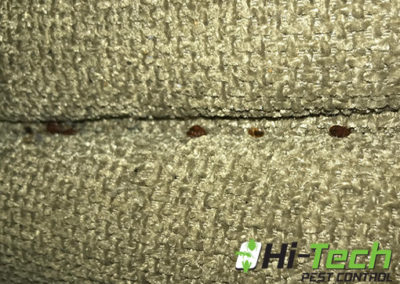 couch-with-bed-bugs-on-it-removed-by-hi-tech-pest-control