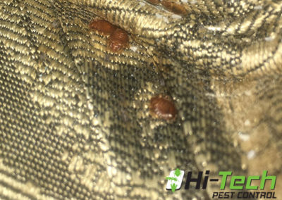 sofa-with-bedbugs-removed-by-our-michigan-pest-control-company