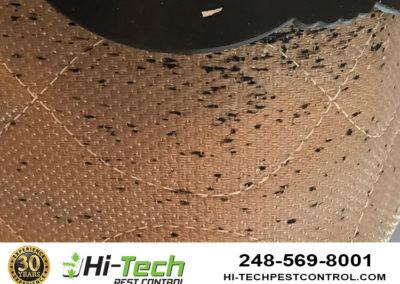 bedbug-infestation-on-bed-mattress