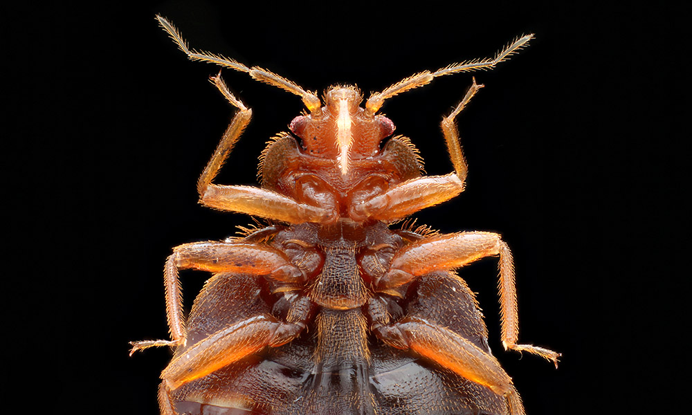 Troy Bed Bug Extermination
