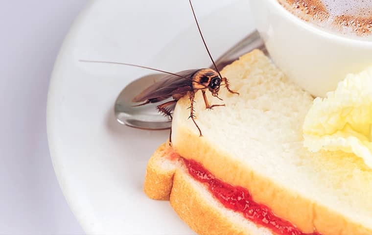 Troy Cockroach Removal - Pest Control