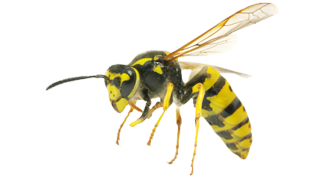 bees-pest-control-services-in-michigan