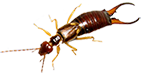 earwigs and bug exterminator services in michigan