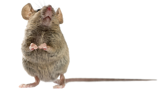 mouse-pest-control-exterminator-service-in-michigan