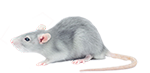 rat removal and bug exterminator services in michigan