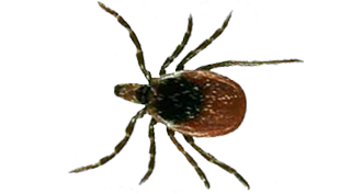 tick-exterminator-in-troy-michigan-and-surrounding-cities